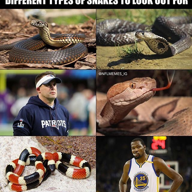 NFL Memes -1